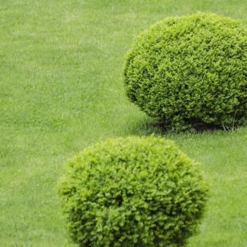 Bulgari de iarba - mariusdonici.ro